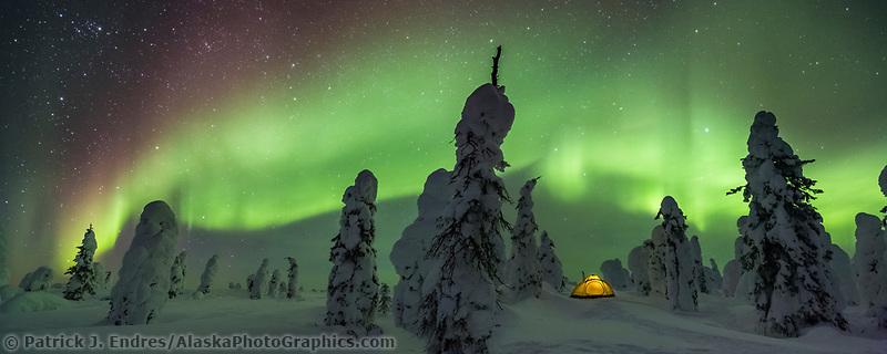 Boreal forest, interior, Alaska.