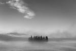 Cypress in mist, Val d'Orcia, Italy