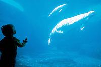 The aquarium at Stamley Park, Vancouver, British Columbia, Canada 06-02