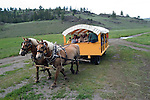 WY: Wyoming; Yellowstone National Park:.Roosevelt Lodge western cookout with horse rides and wagon rides..Photo #: yellow1447.Photo copyright Lee Foster, 510/549-2202, lee@fostertravel.com, www.fostertravel.com..