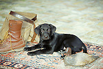 Black Labrador Retriever Shopping cart has 3 Tabs:<br />