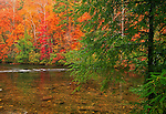 Tellico River, Autumn, Cherokee NF, TN