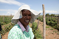 7-8 March 2011. Bergville and Winterton area, Commercial farmers from the No-Till Club. Anthony Muihead (70) has been practising Conservation Agriculture or No-till farming for 15-20 years. Tomato pickers on Anthony Muihead's Farm.