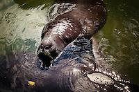 Amazon Jungle, an hour south of Iquitos, Peru, September 14, 2013 -
