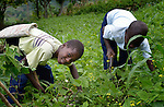 Boys work weeding a field in Les Palmes, a rural village in southern Haiti where the Lutheran World Federation has been working with survivors of the 2010 earthquake, along with other residents, to experience more abundant life.