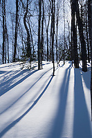 Trees cast long shadows across the snow in a forest near Big Bay Michigan.