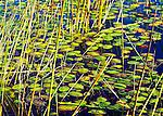 Botswana; Okavango delta; inland delta; fresh water, reed grass aerial and from water level