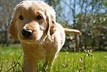Puppy Photos