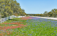 Wildflowers landscape along side of the road going out toward Mason Texas.  We like the white picket fence and the contrast the bluebonnets and indian paintbrush created along the roadside on this afternoon.