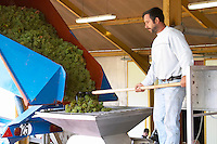 receiving grapes in the press hopper chardonnay dom m juillot mercurey burgundy france