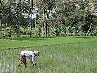 Bali 2000