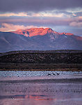 Sunrise over Bosque Del Apache, New Mexico