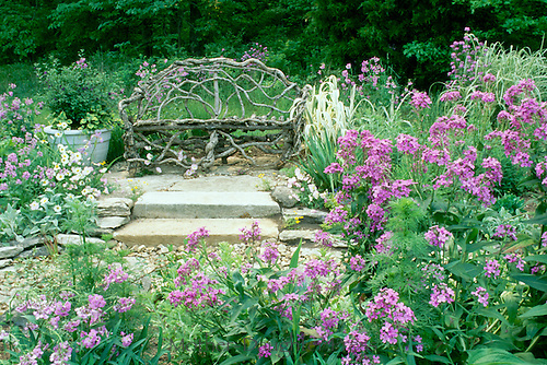 Grapevine bench in spring garden with blooming dames rocket, daisies, primrose,  lambs ear, ornamental grasses