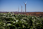 CAETITE, BRAZIL - OCTOBER 25, 2013:<br /> Areldo Silva, 57, and his family, agreed to be paid $250 a month to permit Renova Energia with wind turbines on their 46-acre land. A string of wind-turbine parks, in the municipal of Caetite, are being erected in the windiest stretches of Bahia state, Brazil, on Friday, Oct 25, 2013. <br /> (Photo by Lianne Milton/For The Washington Post