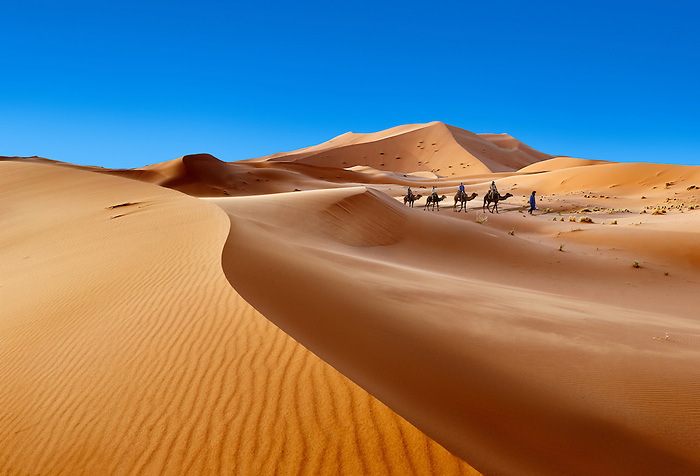 Camel rides on the Sahara sand dunes of erg Chebbi, Morocco, Africa