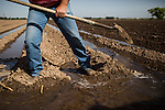 FABENS, TX - APRIL 9, 2015:  Bobby Scov redirects pumped groundwater into furrows on a cotton field on his farm. Scov farms 1500 acres of cotton, pecans and onions on the US-Mexico border. He has to rely exclusively on groundwater until he receives his surface water allotment in June. CREDIT: Max Whittaker for The New York Times