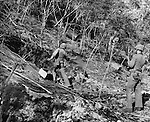 When Japanese snipers holed up in this cave on northern Saipan, Marine Gunnery Sgt. E.L. Blanchard used some persuasion in the form of a hand grenade to drive them out. Small isolated groups of the enemy had to be smoked out from their hiding places to complete the seizure of the island.