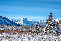 Moose Meadows in Alberta's Banff National Park under a wonderfully bright, sunny sky on a very chilly Canadian January morning.