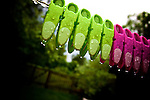 A row of green and pink plastic clothes pegs on a washing line in summer rain