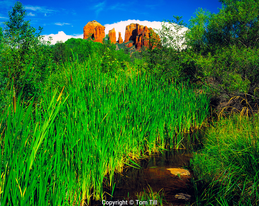 Lush Greenery at Red Rock Crossing, Oak Creek, Arizona     Coconino National Forest   Near Sedona