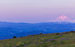 Mount Hood is seen in the early dawn hours with the purple and pink pastel colors of pre-dawn light.