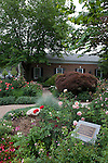 Rose garden in Saugatuck, Michigan, USA