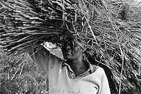 IPLM0046 , South Africa, ga-Modjadji, 29 June 2001. Woman with Thatching grass.