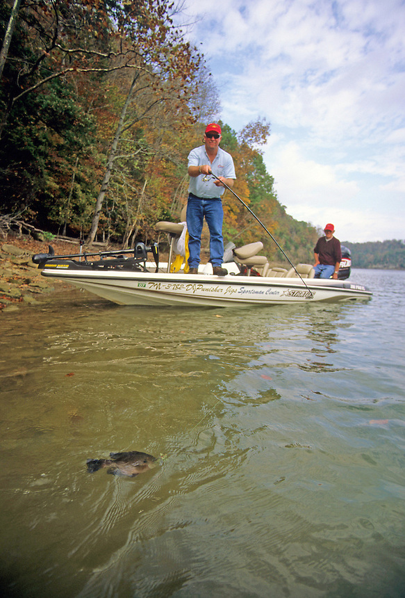 Fall angler tries to land fighting bluegill, Dale Hollow Lake, Tennessee