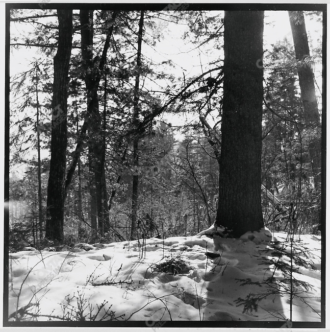 "During his re-education at the Liuhe May 7th Cadre School, Li Zhensheng photographed trees in the snow ""out of admiration for nature's vitality""; Qing?an County, Heilongjiang Province, December 25, 1970"