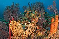 Coral and Sponge Scenic<br /> Frigate Rock<br /> Grenadines
