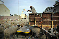 A worker feeds sheep with leftovers from a wedding at Grewal Farms, one of many wedding reception centres in Amritsar which employs hundreds of staff during the wedding season to work around the clock hosting day and night marriage ceremonies and parties.