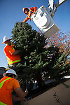 City of Los Altos workers install a Christmas tree on the plaza located at First and Main Streets Dec. 3.