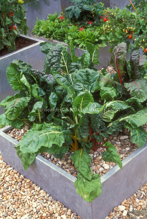 Vegetable Container Garden Images Images Plant Flower Stock