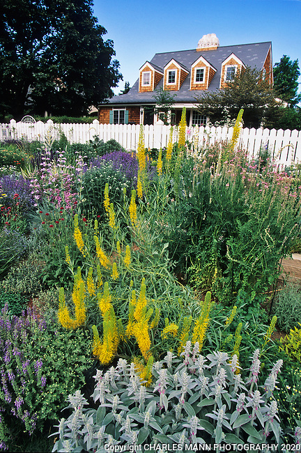 Designed and installed by Denver garden expert Tom Peace, the garden belonging to Ann Weckbaugh features drought tolerant perennials and tough  buffalo grass on the curbside along with beautiful ground covers and other softer perennials in the more intimate plantings near the house.