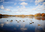 Geese on Belmont Lake State Park on a beautiful November Day, Babylon, Long Island