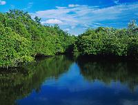 Mangrove forest at high tide, J. N. Ding Darling National Wildlife Refuge, Sanibel Island, Florida, USA