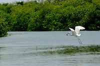 Mexico, Yucatan, Sian Ka'an Biosphere Reserve, Egret
