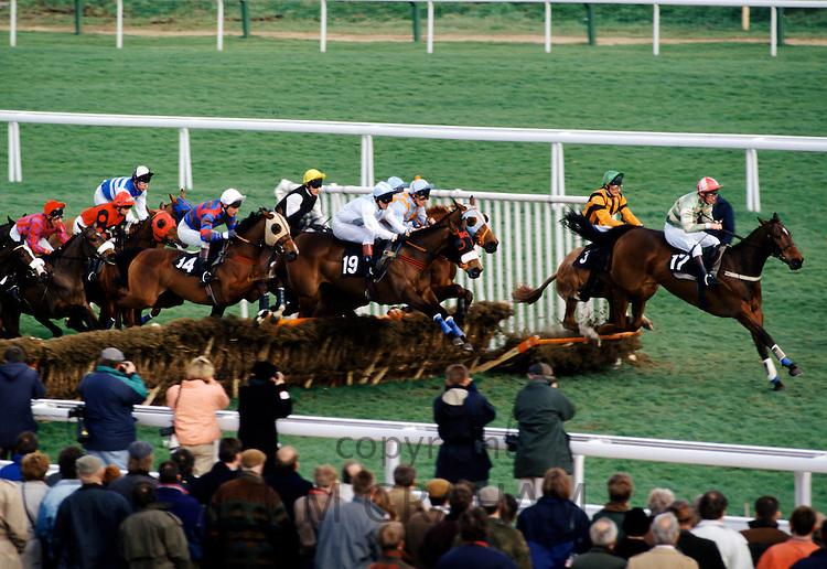 Racehorses and jockeys going over the sticks at Cheltenham Racecourse for the National Hunt Festival of Racing, UK