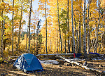 Campsite in grove of quaking aspen, Populus tremuloides. Hope Valley, Sierra Nevada Mountains, California