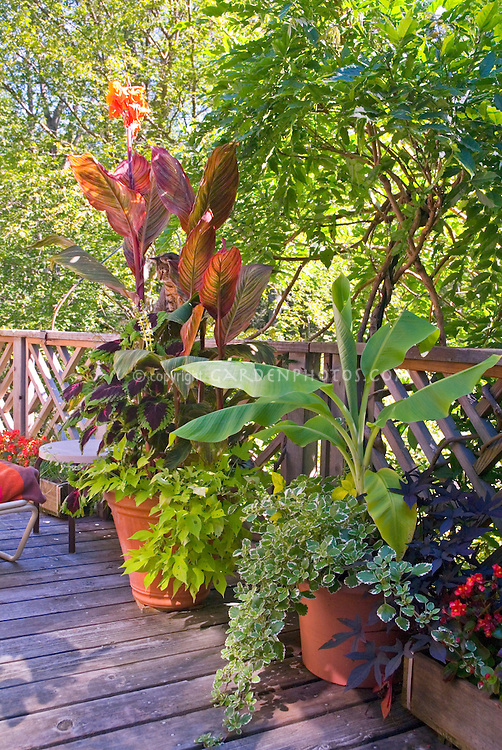 Deck container garden annual tropical plants plant flower stock photography - Tropical container garden ...