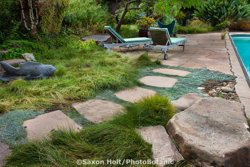 Flagstone stepping stone path through Dymondia groundcovers and sedge meadow lawn substitute (Carex pansa) toward patio by swimming pool in Sherry Merciari garden