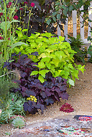 Heuchera dark leafed purple need id, Sempervivum,  Physocarpus, white fence, patio, pebble mulch, flowers