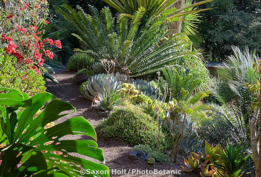 dirt path along succulent border on sunny day in Worth Garden, California