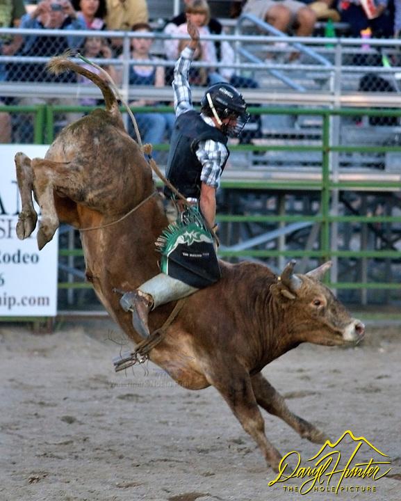 Bull rider, Jackson Hole Rodeo
