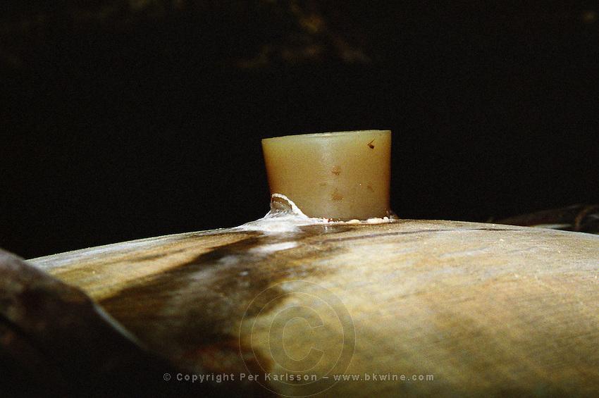 A barrel of fermenting white burgundy wine at chateau Genot-Boulanger, Meursault, Cote d'Or, Bourgogne