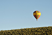 Colorful stock photo and fine art photo of a hot air ballon suspended in air over a vineyard