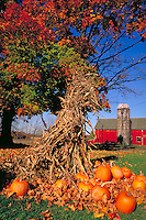 Pumpkins & corn stalks decorate farm in autumn, farms, farming, fall foliage, harvest. Cassopolis Michigan USA nearby.