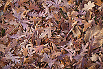 Colorful Leaves on the ground fall autumn winter