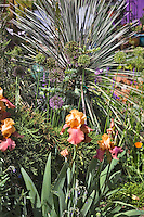 Some bearded irises in bloom and a strap-leaved yucca create a dramatic June composition in Dan Johnson's Denver garden.