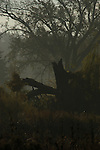 foggy landscape scene with a split tree as the main focus of the image